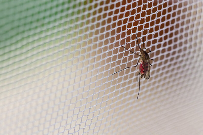 What attracts mosquitoes to home