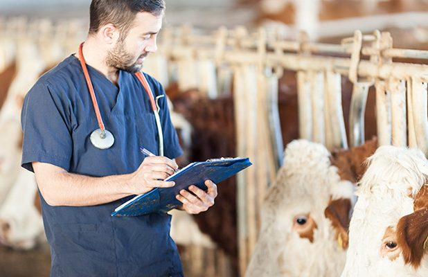 Different types of veterinarian salary
