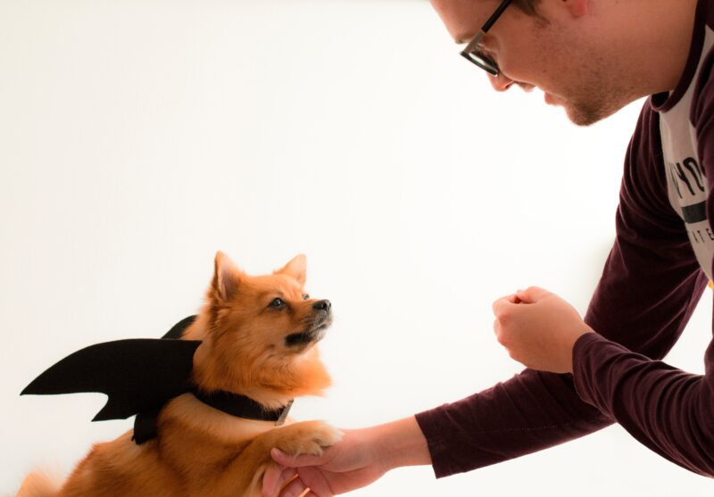 What are different types of veterinarians?
