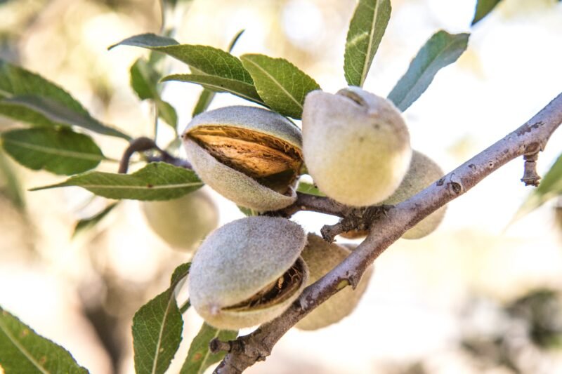 Nuts universe: Here's how many almonds you should eat for a healthy mind, body and soul