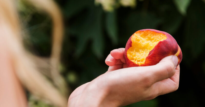 Nectarines 101: Read this before you chew it