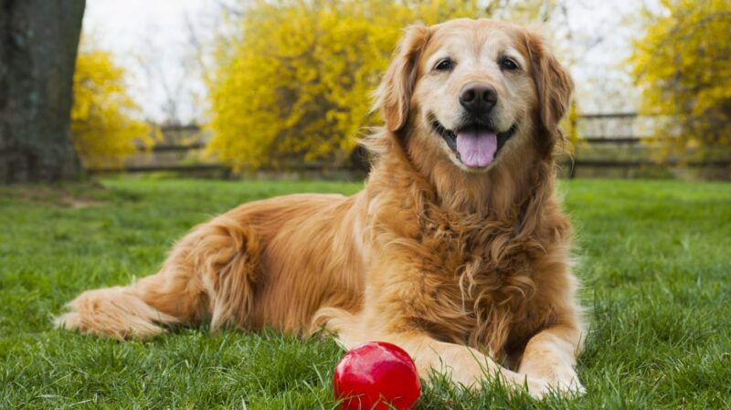 how long does it take for a dog to poop after eating