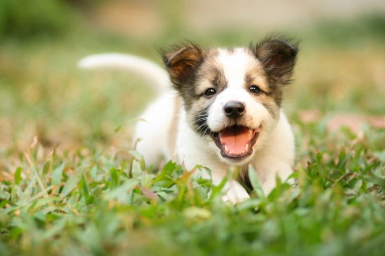 how to stop my dog from biting when excited