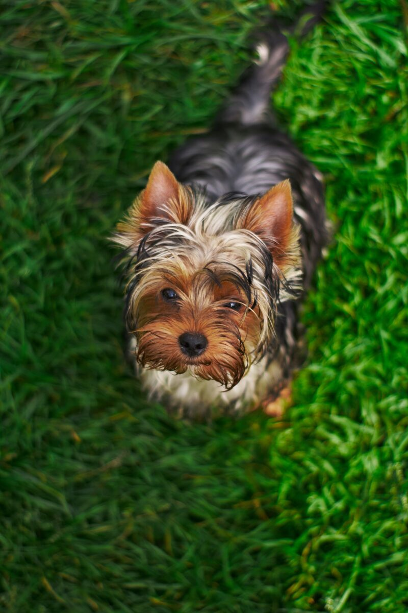 How to get rid of dog urine smell outside