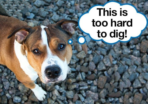 How to keep dog from digging under chain link fence