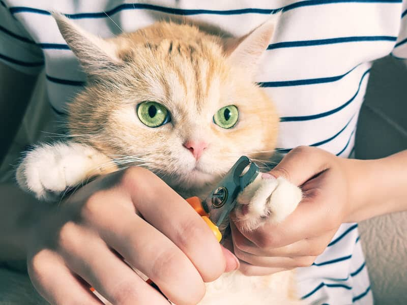 how to restrain a cat to clip nails