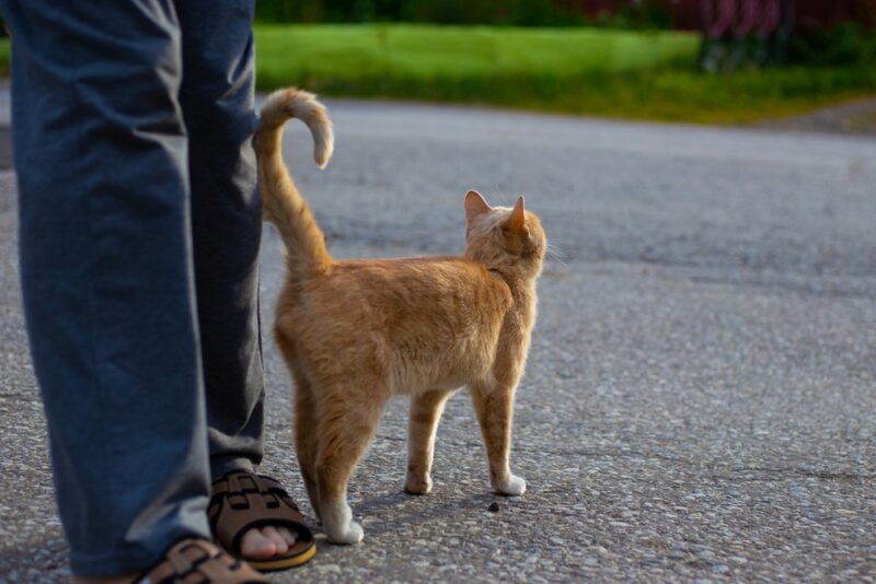 Secrets Behind Cat's Tail Positions